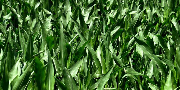 Негативные выводы из исследования применения биотоплива