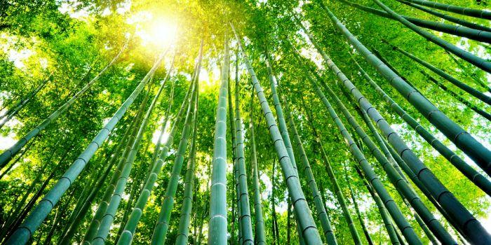 Может ли «зеленый рост» сдержать изменение климата?