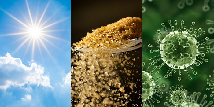 Бактерии для производства дешевого водорода из сахара