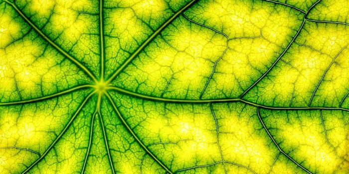 Обратный фотосинтез для получения топлива из биомассы