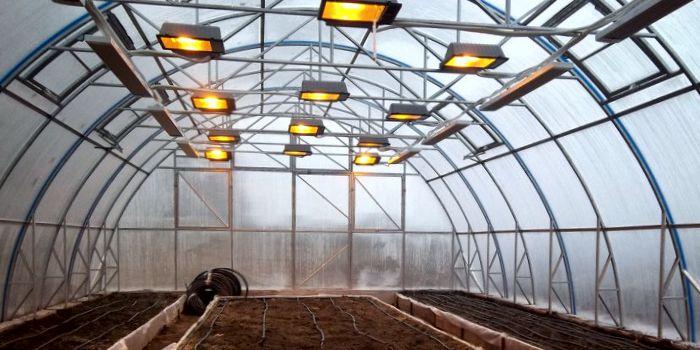 Инфракрасный обогрев теплиц для лучшего роста растений