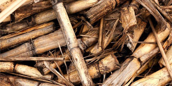 Катализ в производстве биодизеля и переэтерификация масел