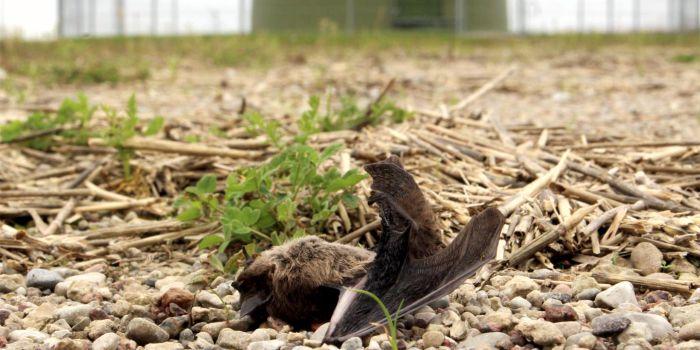 Противопоставление заботы о климате биоразнообразию