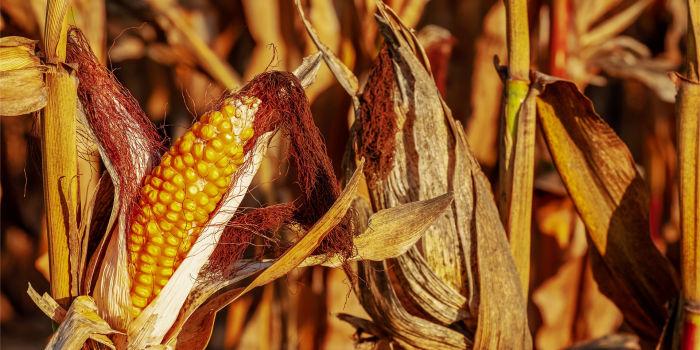 Улучшение превращения растительных отходов в биотопливо