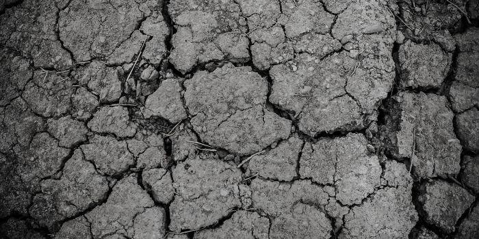Почва - лучший союзник в борьбе с изменением климата
