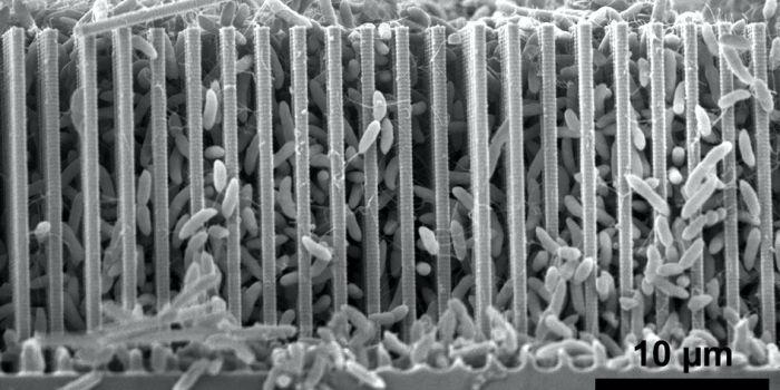 Бактерии и нанопровода для создания органических молекул