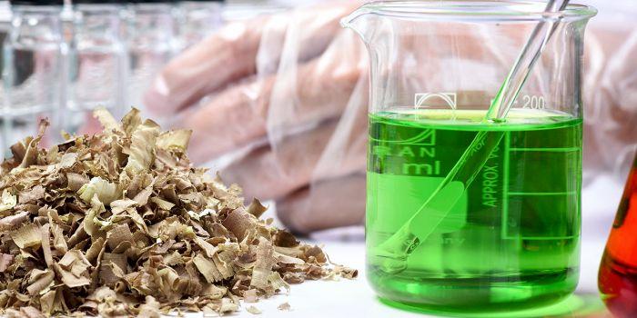 Развитие производства биотоплива из рапса в России