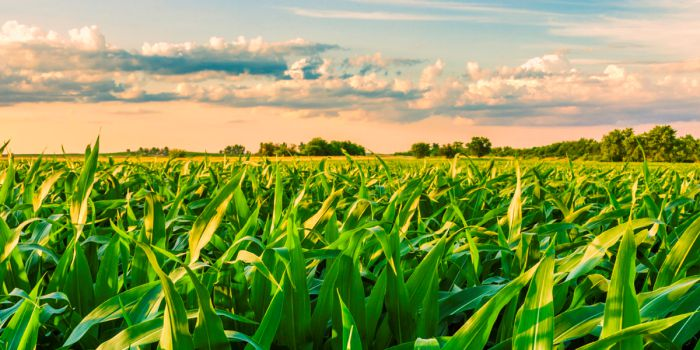 Использование биотоплива в альтернативной энергетике