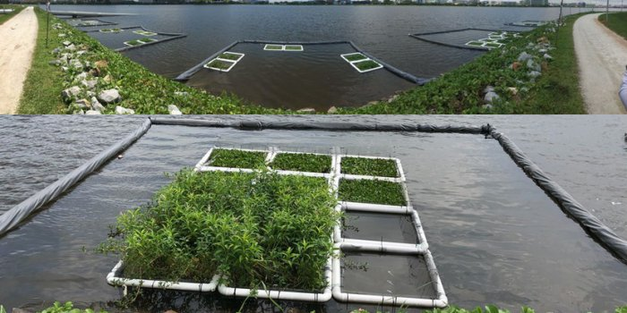 Улучшение качества воды в водоемах с помощью растений