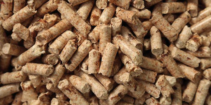 Энергия биомассы: чистая или загрязняет окружающую среду?
