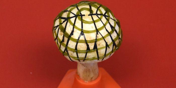 Бионический гриб - альтернативный источник электрической энергии
