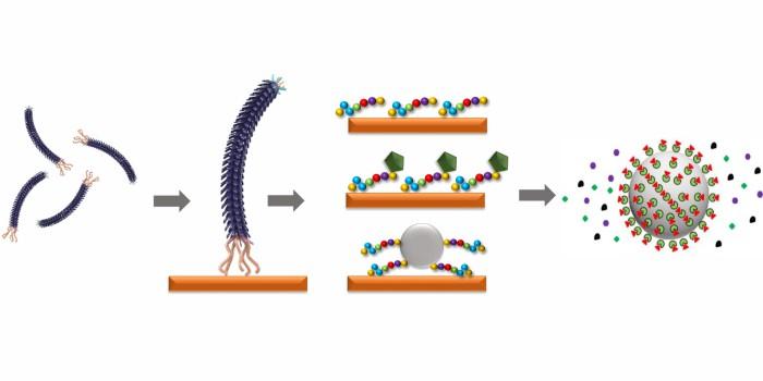 Перерабатываемый материал может быть восстановлен до исходного сырья с помощью пептидов (в центре). Для получения сырьевых фрагментов из целевого материала (оранжевого цвета) используются бактериофаги - вирусы, избирательно поражающие бактериальные клетки (слева). Пептиды, прикрепленные к полученным сырьевым компонентам (справа), выводят желаемый химический элемент из раствора. Автор изображения: Dr. Franziska Lederer, HZDR