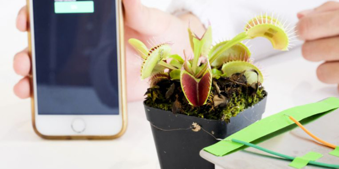Общение с растениями с помощью электрических сигналов